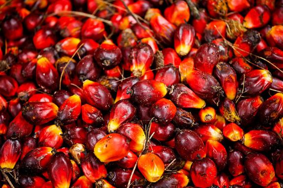 Picture 1:Palmolie, zonnebloemolie en anderen